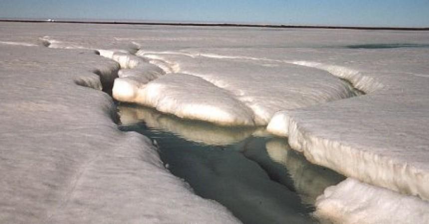 Tallant el pastís de l'Àrtic