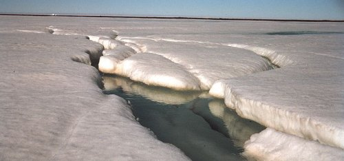 L'Àrtic és un caramel molt llaminer. Foto: Vikicommons