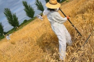La calçotada agroecològica de Valls dóna el tret de sortida a les mobilitzacions contra els transgènics